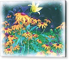 A Lily In The Field Acrylic Print by Patricia Griffin Brett