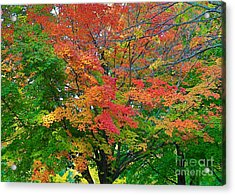 Acrylic Print featuring the photograph A Michigan Fall by Robert Pearson