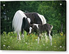 A Mother's Love Acrylic Print by Laurie Comfort