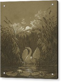 A Swan Among The Reeds, By Moonlight Acrylic Print