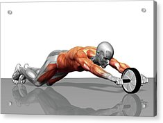Ab Wheel Exercise Acrylic Print by MedicalRF.com