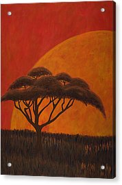 Acacia At Sunset Acrylic Print by Diane Korf