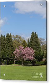 Accolade Cherry Tree Acrylic Print by Bahadir Yeniceri