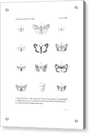 Acrylic Print featuring the drawing African Butterflies by Bernhard Wienker
