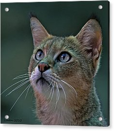 African Wild Cat Acrylic Print by Larry Linton