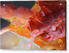 Acrylic Print featuring the photograph After The Rain by Angela Murdock