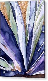 Agave 3 Acrylic Print by Eunice Olson