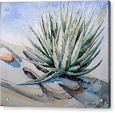 Acrylic Print featuring the painting Agave by Steven Holder