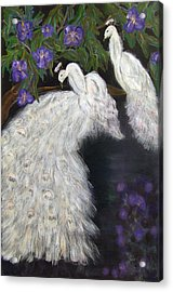 Albino Peacocks Acrylic Print by Mikki Alhart