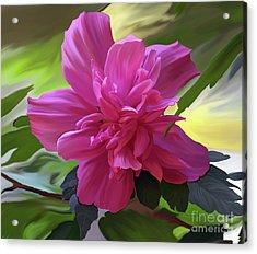 Althea Hibiscus I Acrylic Print