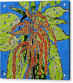 Amaranthus Sold Acrylic Print by Ray  Petersen