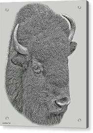 American Bison Acrylic Print by Larry Linton