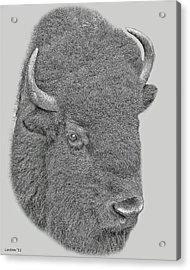 American Bison Acrylic Print