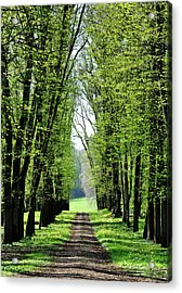 An Alley In Spring Acrylic Print by Dutourdumonde Photography