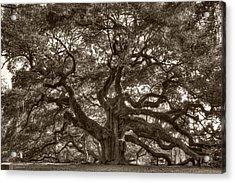 Angel Oak Live Oak Tree Acrylic Print