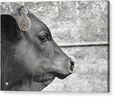 Animal Royalty 13 Acrylic Print by Sumit Mehndiratta