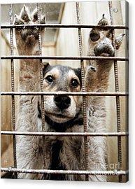Animal Shelter, Russia Acrylic Print by RIA Novosti