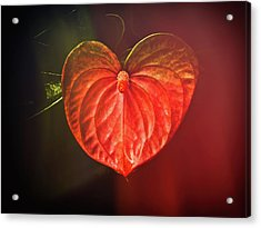Anthurium Acrylic Print by Joe Carini