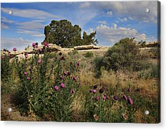 Acrylic Print featuring the photograph Arizona Desert by Joseph G Holland