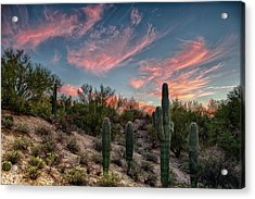Arizona Sunset Acrylic Print