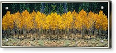 Acrylic Print featuring the photograph Aspen Stand by Sherri Meyer