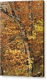 Autumn Colors Acrylic Print by Andrew Soundarajan