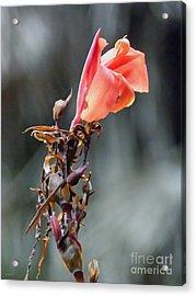 Autumn Flower  Acrylic Print by Jason Christopher