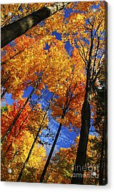 Autumn Forest Acrylic Print by Elena Elisseeva