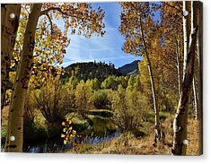 Autumn In Bishop Creek Acrylic Print by Dung Ma