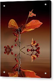 Acrylic Print featuring the photograph Autumn Leafs And Red Berries by David French