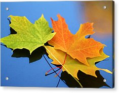 Autumn Leaves - Foliage Acrylic Print by Dmitriy Margolin