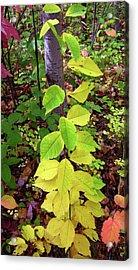 Autumn Leaves II Acrylic Print