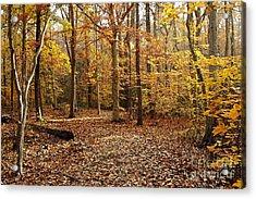 Autumn Scenery 2 Acrylic Print by Hideaki Sakurai