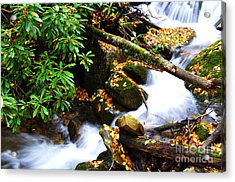 Autumn Serenity Acrylic Print by Thomas R Fletcher