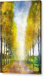 Autumn Trees Acrylic Print by Svetlana Sewell