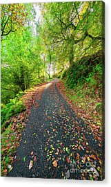 Autumn Way Acrylic Print by Adrian Evans