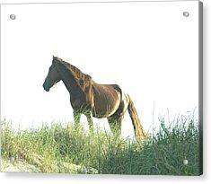 Banker Horse On Dune - 2 Acrylic Print