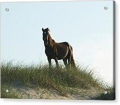 Banker Horse On Dune - 3 Acrylic Print