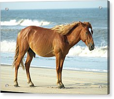 Banker Horses - 2 Acrylic Print