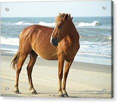 Banker Horses - 6 Acrylic Print