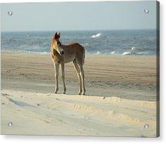 Banker Horses - 9 Acrylic Print
