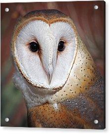 Barn Owl Acrylic Print by Elaine Malott