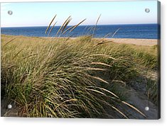 Beach Grass At Truro Acrylic Print by Frank Russell