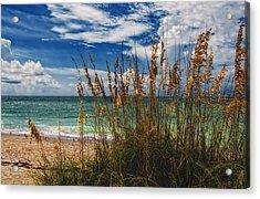 Beach Grass II Acrylic Print