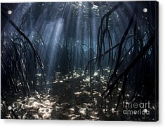 Beams Of Sunlight Filter Among The Prop Acrylic Print by Ethan Daniels