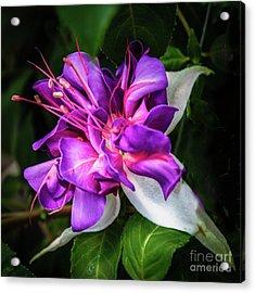 Beautiful Fuchsia Acrylic Print by Robert Bales
