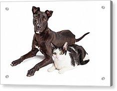 Beautiful Large Labrador Retriever Crossbreed Dog Acrylic Print by Susan Schmitz