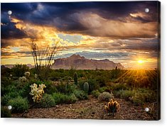 Beauty In The Desert Acrylic Print