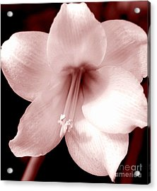 Beauty Acrylic Print by Kathleen Struckle
