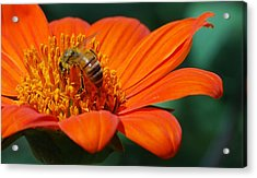 Acrylic Print featuring the photograph Bee-utiful by Debbie Karnes